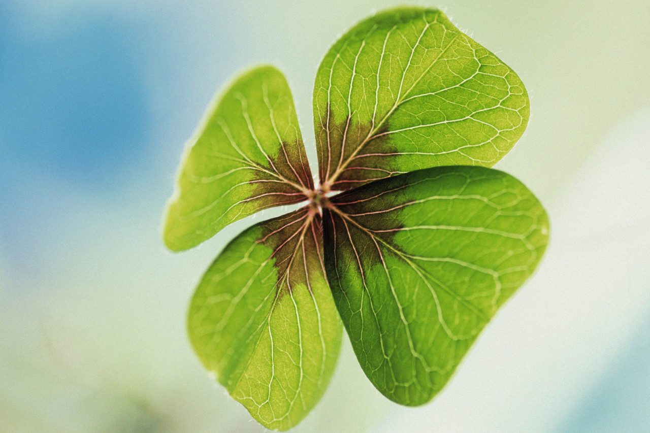 I'm Looking Over a Four-leaf Clover