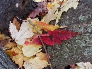 Leaf Landings {A Pondering & Praise Post}