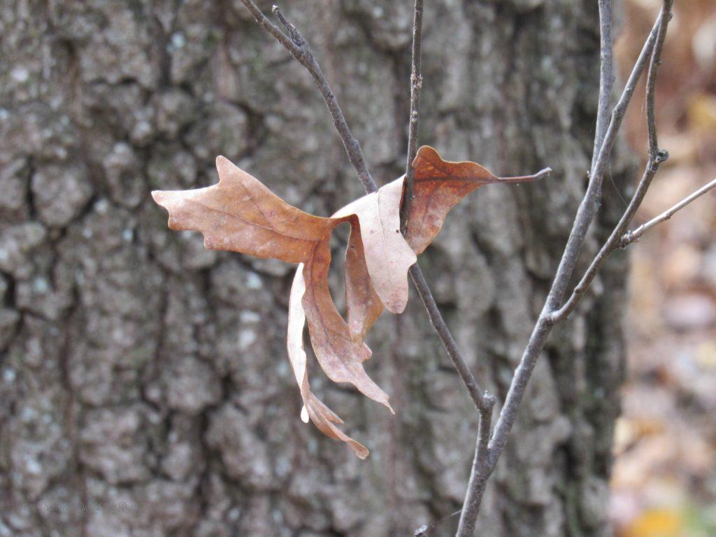 leaflandings2016-2