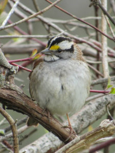 A Sparrow's Song {Friday in Focus}