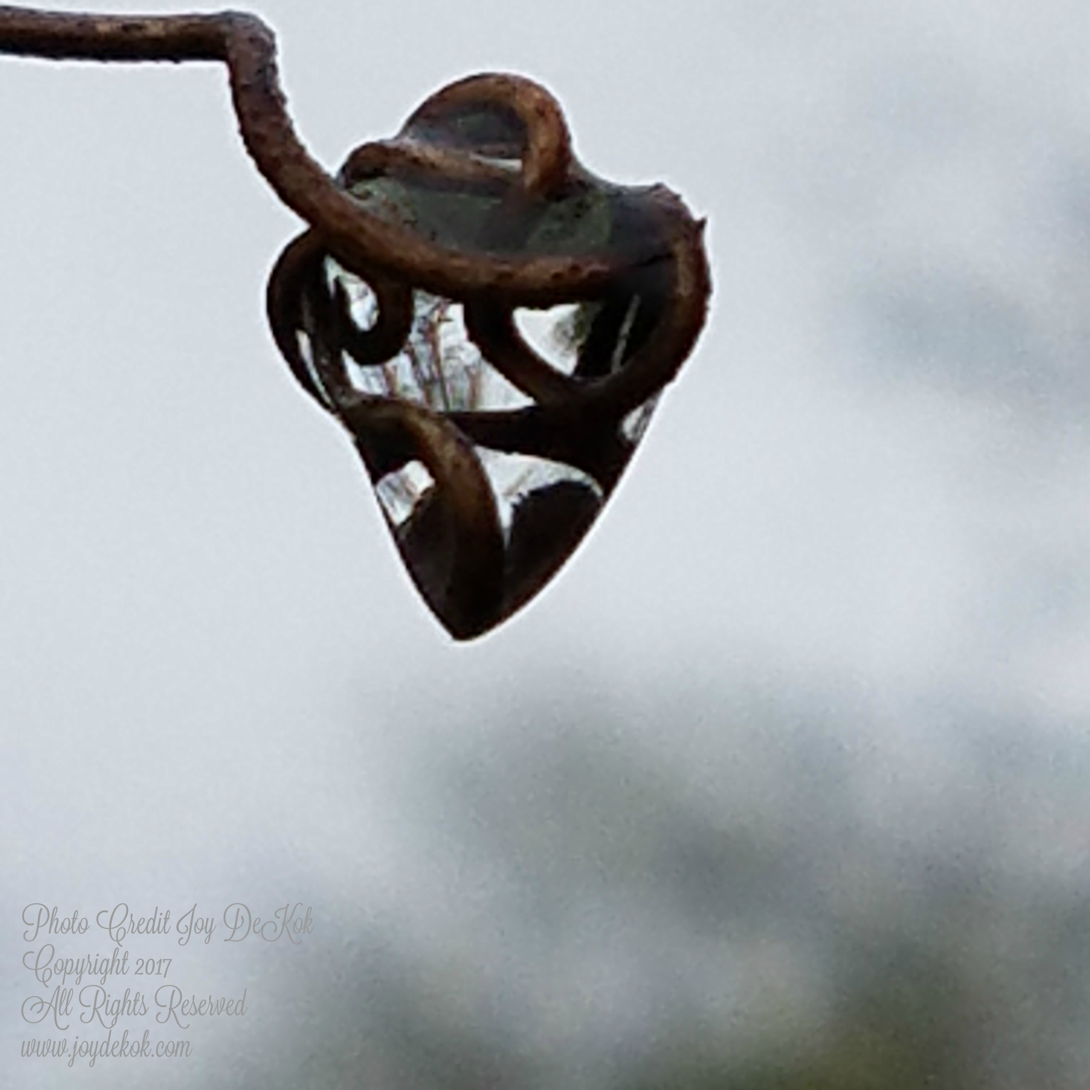 A Transparent Heart {A Pondering Post}