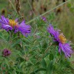 signed-purpleasters-72dpi-4032x3024-pixals