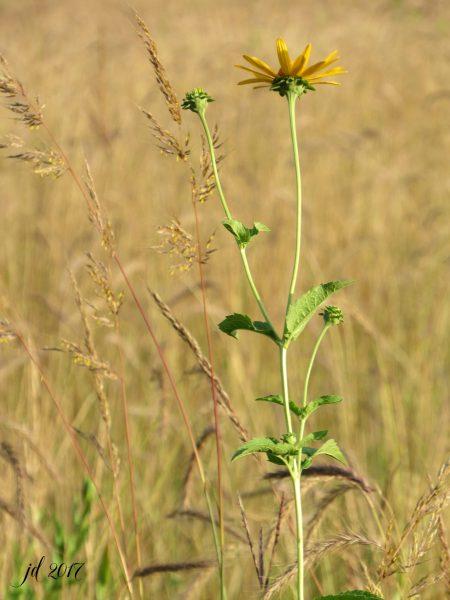 signed-prairie-blossom-180dpi-3456x4608-pixals