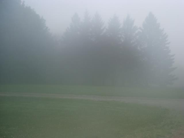 Fog – A Poem
