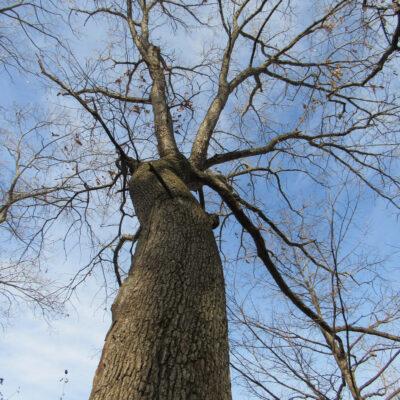 The Tree I Love – An Essay