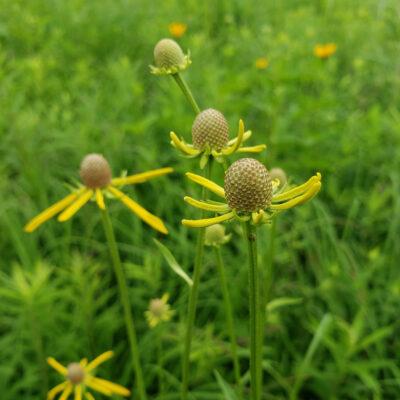 Unique Focus – A Nature Essay
