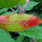 signed-leaf-72dpi-4032x3024-pixals