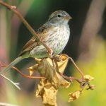 sparrow-4-x-6-300-dpi