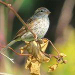 sparrow5x7-300-dpi